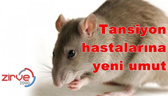 Sebebini fareler çıkaracak