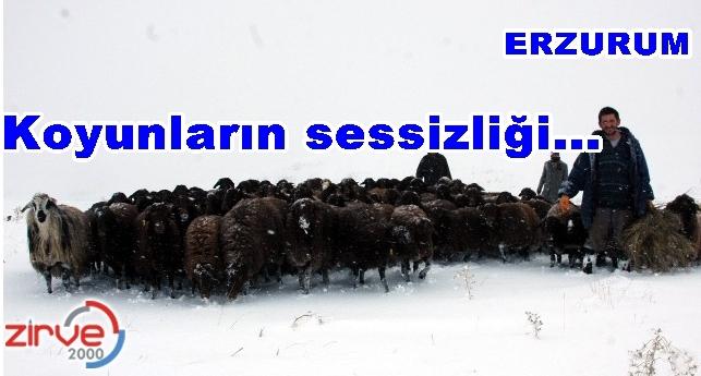 Koyunlar kara bata çıka ahırlarına gittiler