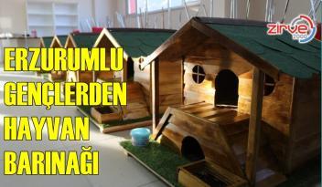 Gönüllüler sokak hayvanlarına ahşaptan ev yaptılar
