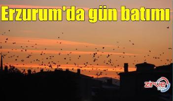 Erzurum'da kargaların günbatımıyla dansı