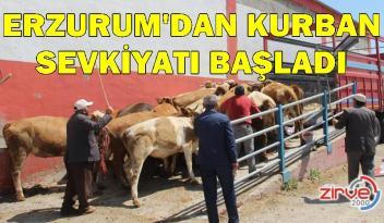Erzurum'dan batı illerine kurbanlık sevkiyatı başladı
