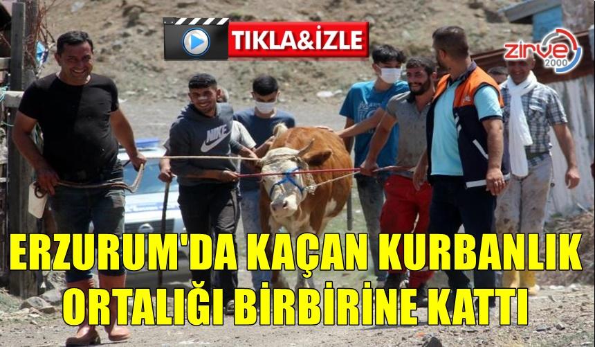 Erzurum'da kaçan kurbanlıklar ortalığı birbirine kattı