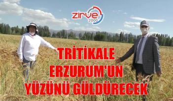 'Ümran Hanım Tritikale' yemi çiftçilerin yüzünü güldürecek